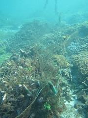 美麗的珊瑚覆上漁網