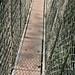 Kakum canopy walk, Ghana - IMG_1527_CR2_v1