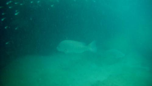 Koh Samui Chaweng Noi Snorkel サムイ島チャウエンノイ スノーケル (4)