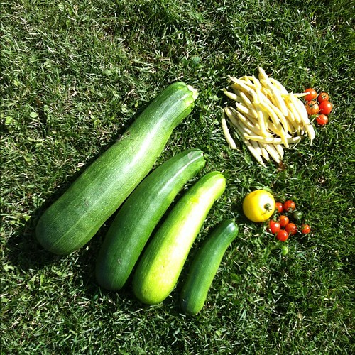 This morning's harvest. The zucchini on the left comes past my knee when standing upright. (@melthiessen, the beans and tomatoes by them are from your plants. I'll send them home with your boys.)