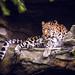 Armurleopard by MatthiasX1