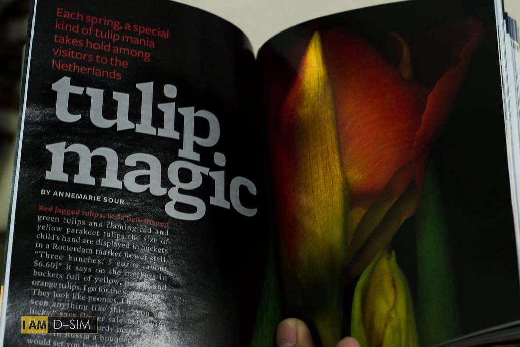 Tulip Magic on Reader's Digest