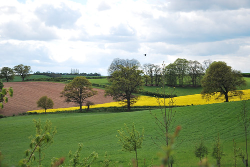 Calverton Fields