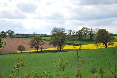 Calverton Fields
