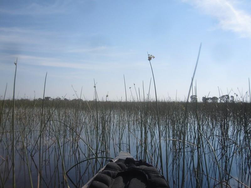 Okavango Delta Botswana Scene Africa