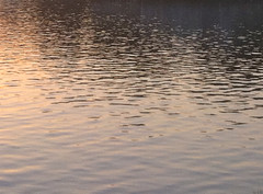 Ripples in the Water at Sunset by randubnick
