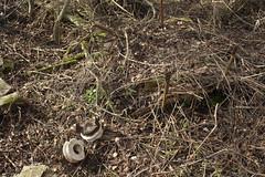 20120224 005 Croxley Green Depot Headshunt Remnants