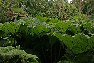 Lost garden of Heligan