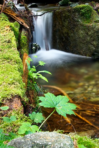water leaf moss log waterfalls