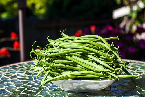 Maxibel Beans