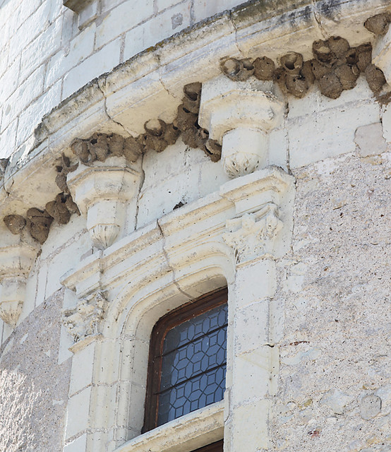 Swallows' nests on the Guards' Tower at Château de Chenonceau