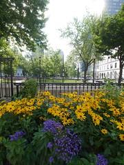 日, 2012-07-29 09:12 - Dorchester Square