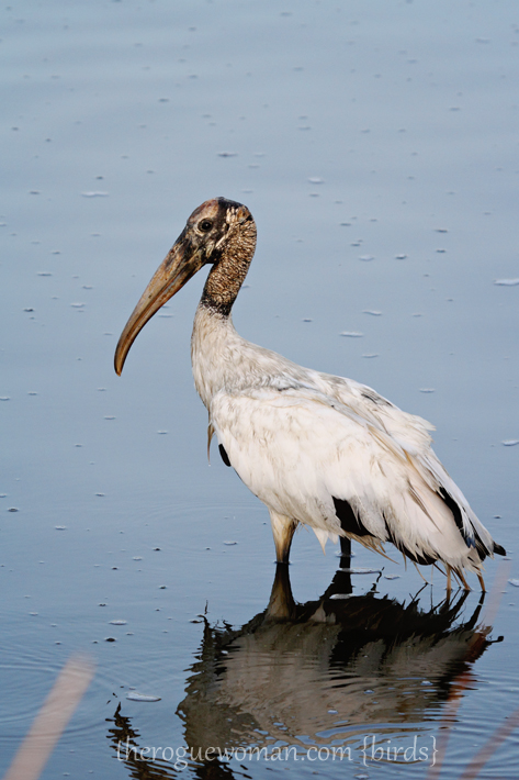 072312_03_bird_woodStork02