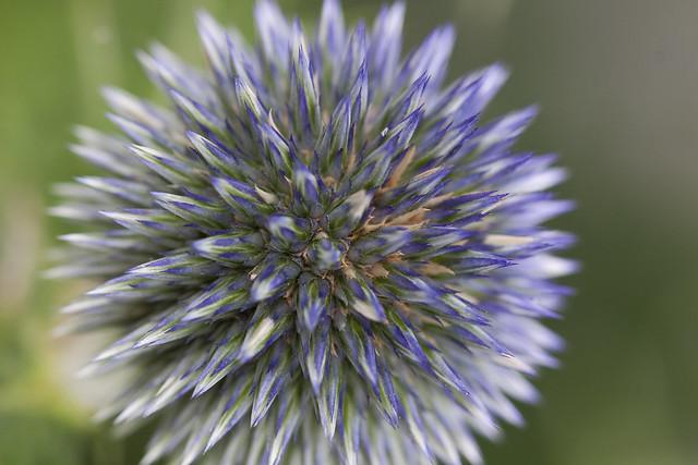 spikey flower2