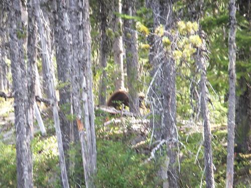 een beer tussen de bomen