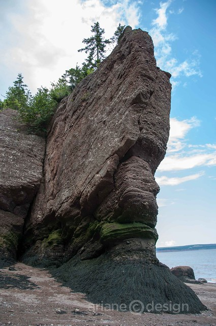 Hopewell Rocks-10