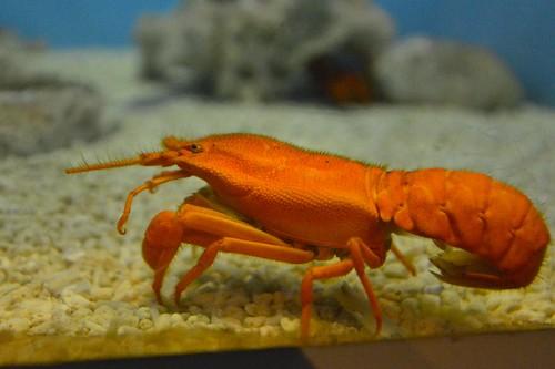 2012夏日大作戰 - 鹿児島 - かごしま水族館 (11)