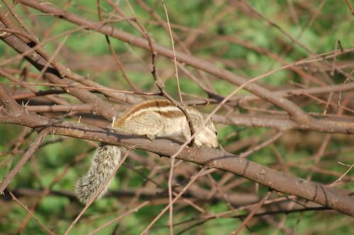Ein Nager sitzt zwischen Ästen im Baum