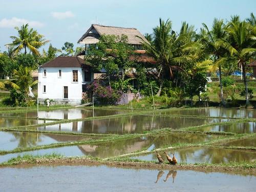 Bali- Ubud-Rizières (27)