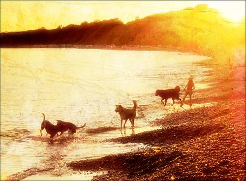 sunset dog beach silhouette play vancouverisland