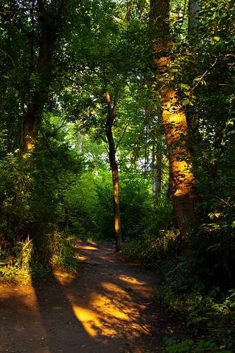 Faerie path by digitalis_vitae