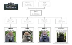 Gorilla Family - Jakarta