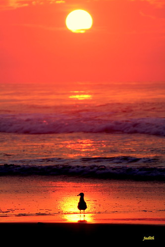 ocean sky orange bird beach nature silhouette sunrise newjersey seagull wildwood newjerseywildlife