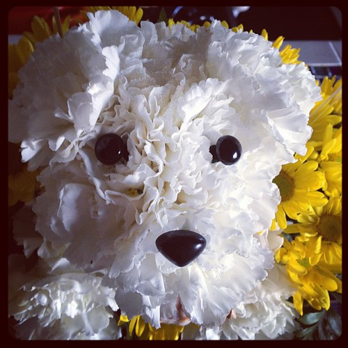 Seriously @2bestill, this flower puppy face is KILLING me.