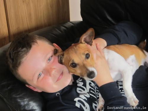 Sat, Sep 3rd, 2016 Lost Male Dog - Kilberry, Athy, Kildare