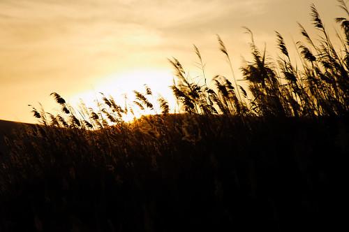 desert egypt flickr sand siwa sunset matrouhgovernorate egitto eg