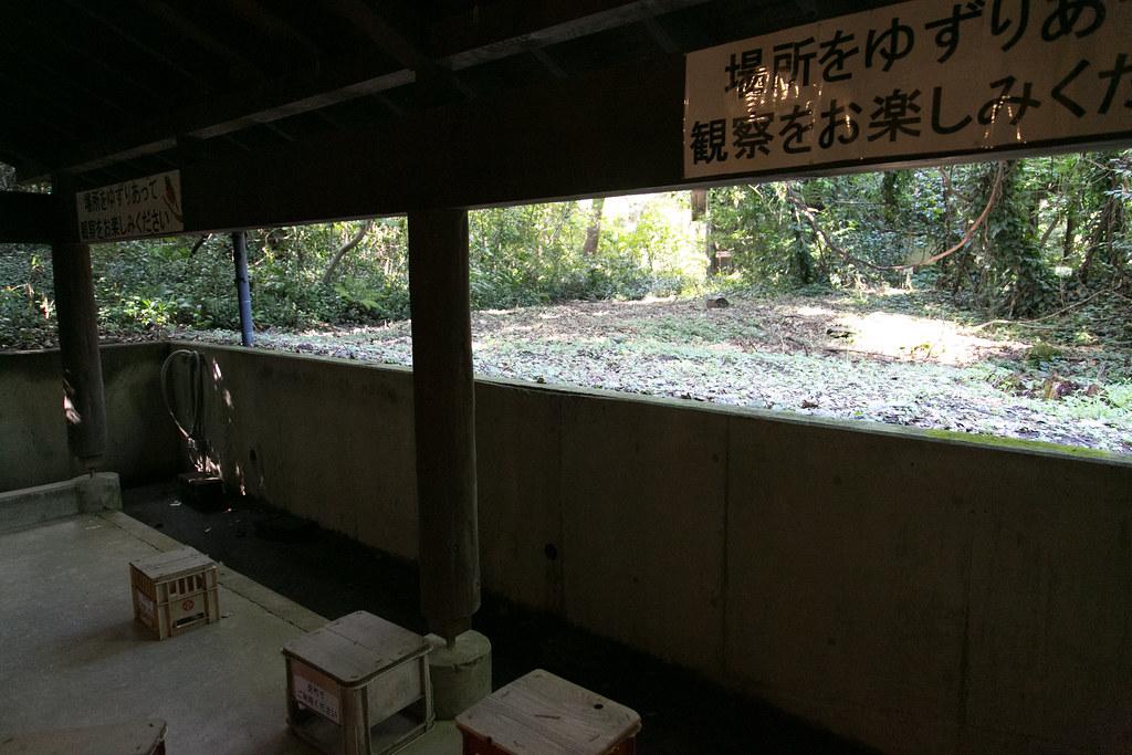 アカコッコ館 三宅島 取材 #tamashima #miyakejima #tokyo #tokyoreporter