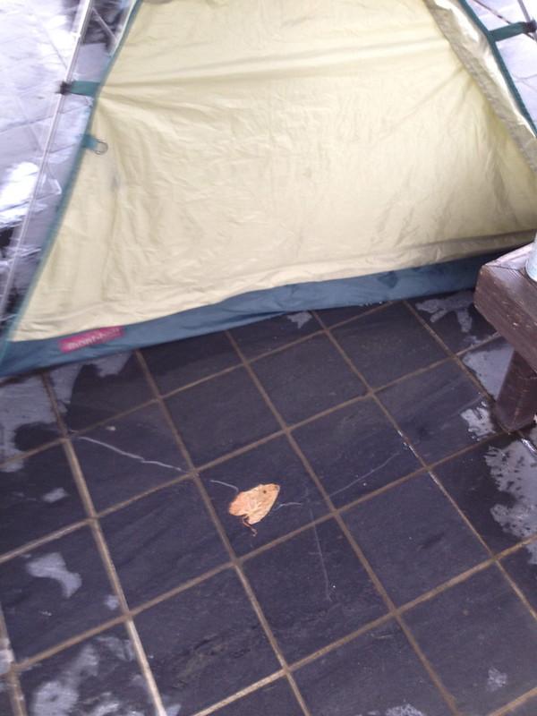 テントに水が