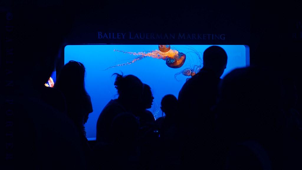 Jelly Fish V