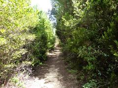 Sentier entre Pozzo Nero et Pozzo Sale