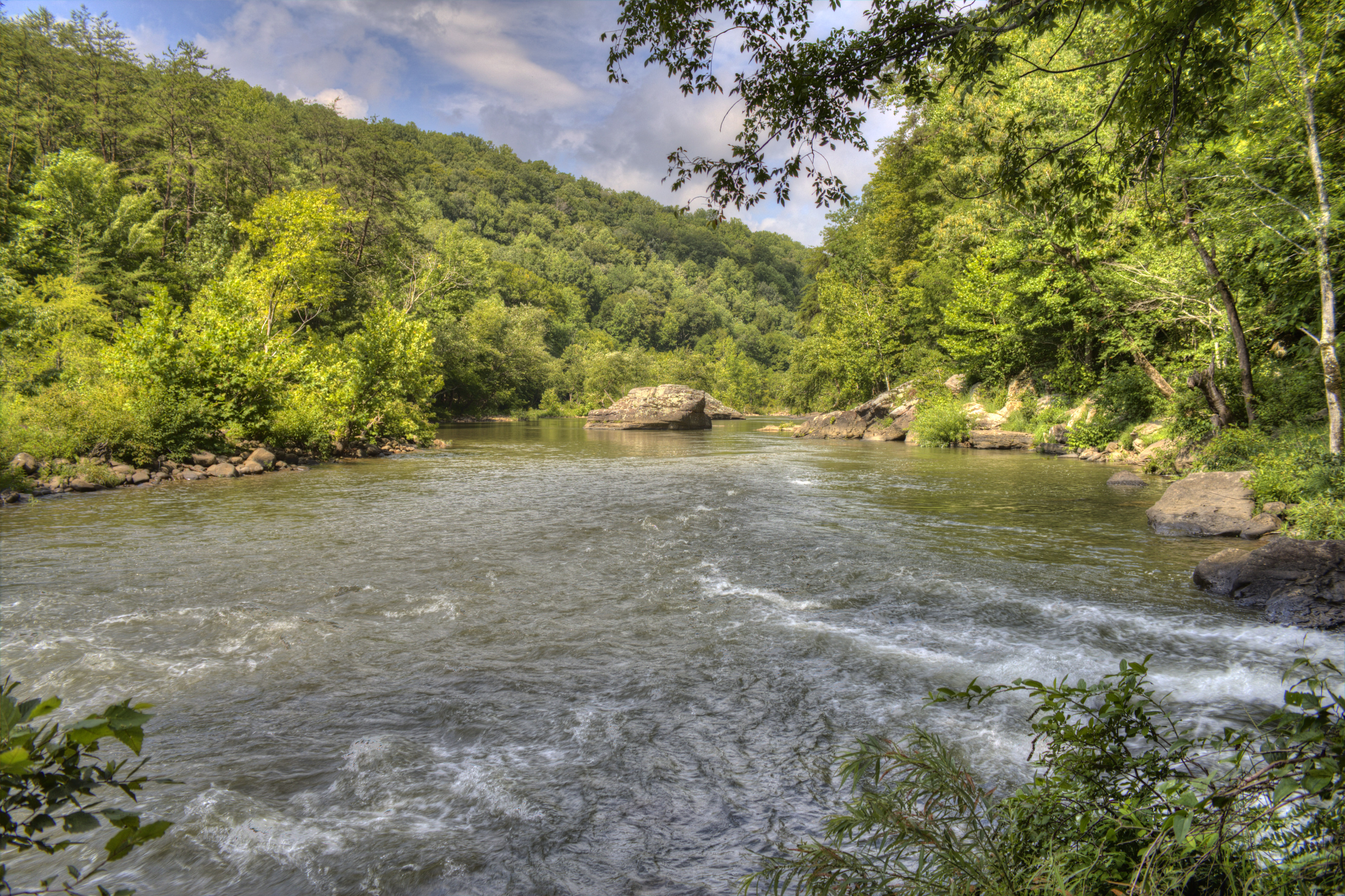 Natural Ecosystems Perform Wastewater Treatment