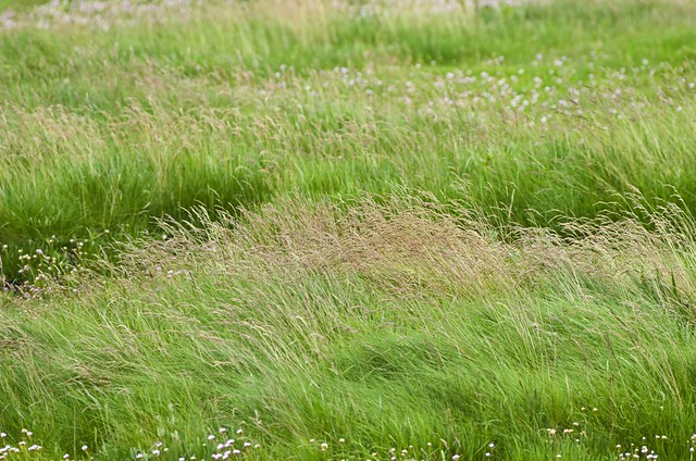 grassy meadows single women The world's best hiking trails for women the world's best hiking trips for single female rivers, and thick grassy meadows make every (sometimes.