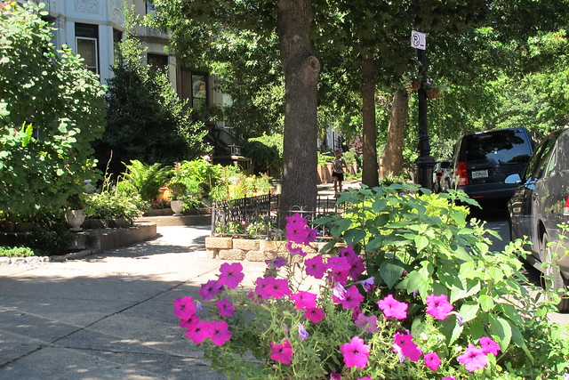 The Greenest Blocks In Brooklyn Are In Prospect Lefferts Gardens Ditmas Park And Flatbush