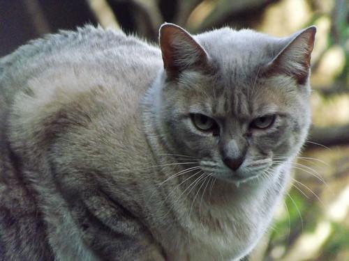 Cranky Puss 2 by smallfox2