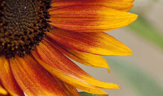 orange flower 4