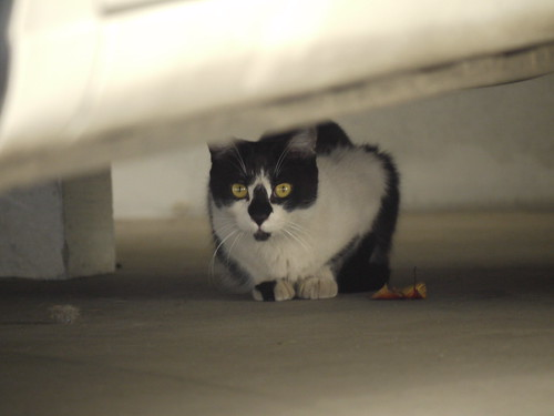 猫@台東区
