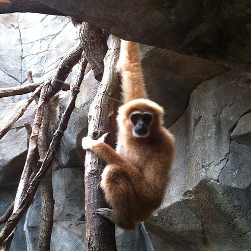 Kölner Affe #köln #zoo