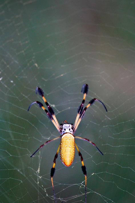 072612_04_bug_spider02