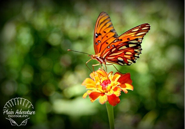 7805671354 4563dc05f9 z Flora Photography Number 10   Butterfly getting nectar