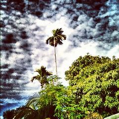 Sunny day. #Maldives #love #instagood #iphonesia #photooftheday #instamood #igers #instacanvas #cute #iphoneonly #instagramhub #picoftheday #jj #instadaily #bestoftheday #igdaily #beautiful #webstagram #palm #instahub #picstitch #igaddict #nature #travel