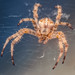 Just a spider by janusz l