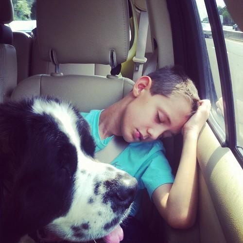 WPIR - dog tired