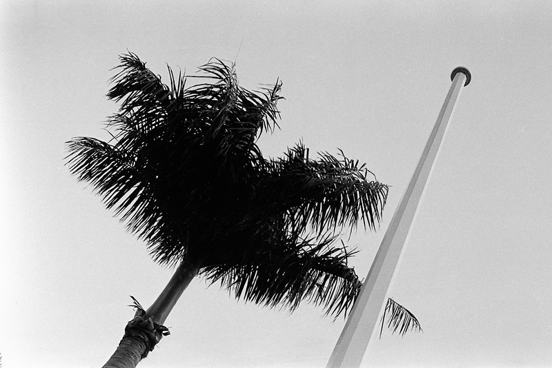 Palm and empty flag pole: the lost American dream