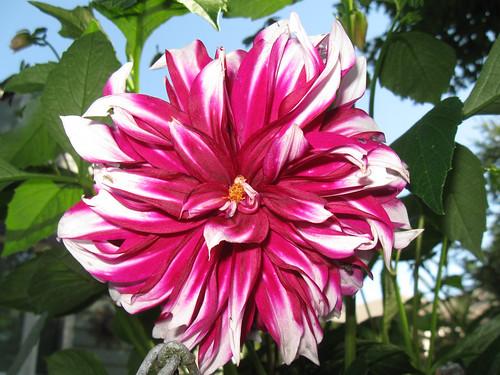 Macro Flowers 6