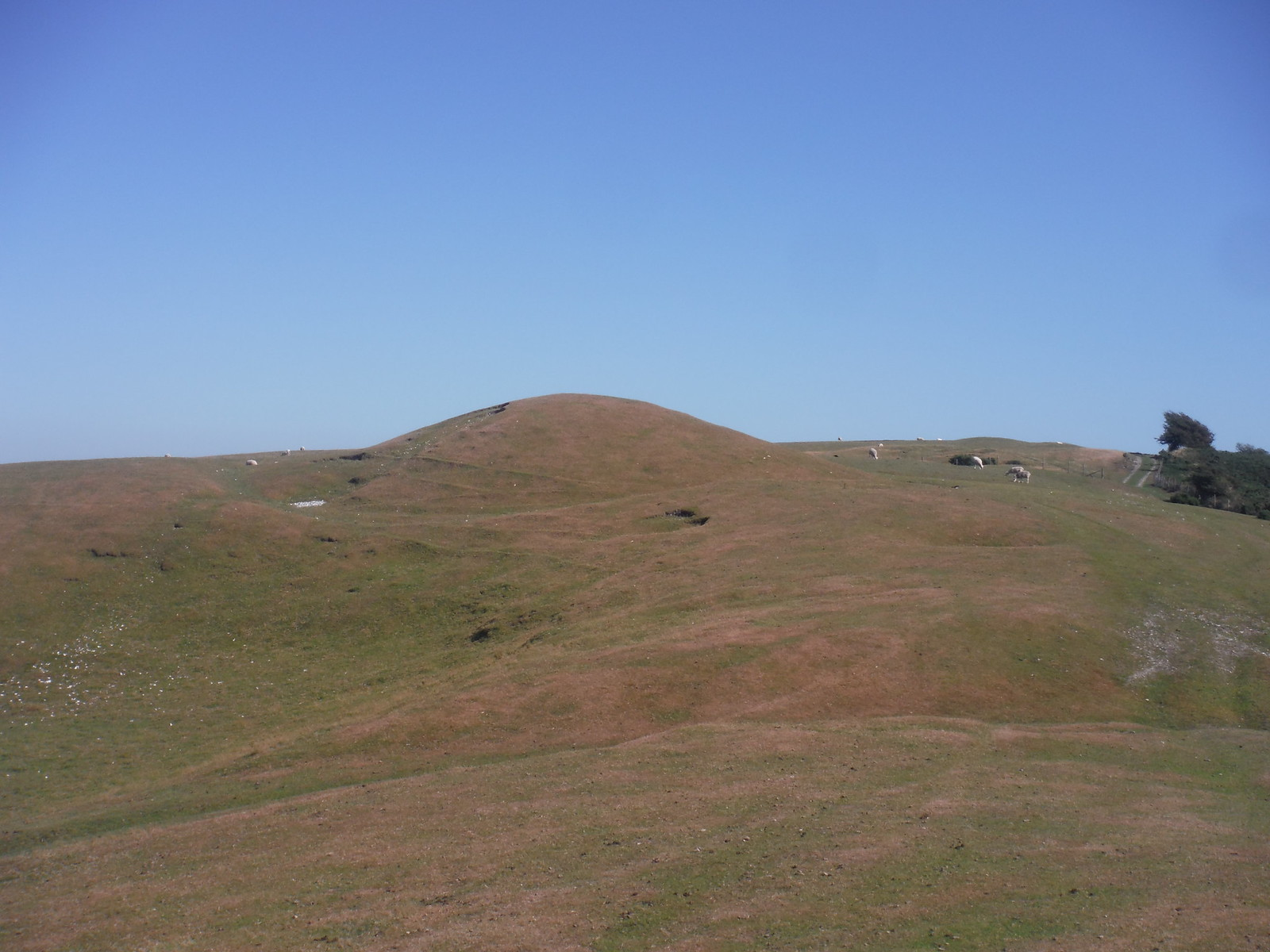 Barrow/Tumulus on Bronkham Hill SWC Walk 275 Dorchester South Circular or to Portesham
