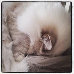 Vad är vad i den här pälshögen? Inte helt lätt att se. #kattvakt